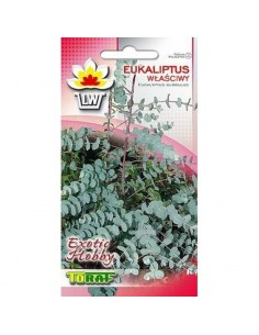 Eukaliptus właściwy 10szt