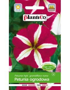 Petunia ogrodowa biało-czerwona 0,05g