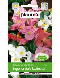 Begonia stale kwitnąca miesz. 0,1g