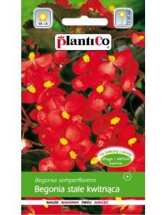 Begonia stale kwitnąca czerwona Pomorzanka 0,1g