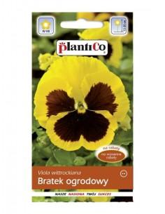 Bratek ogrodowy Goldgelb żółty 0,5g