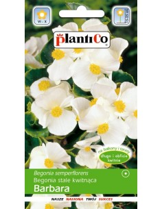 Begonia stale kwitnąca Barbara biała 0,1g