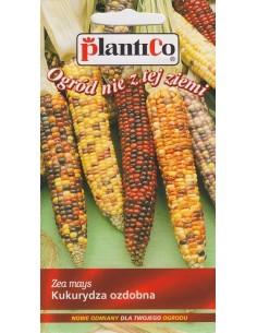 Kukurydza ozdobna Amero kolorowe kolby 4g