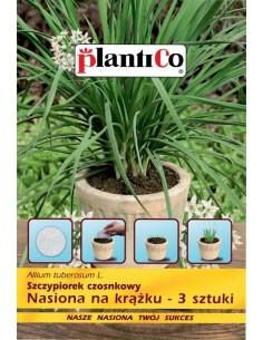 Szczypiorek czosnkowy nasiona na krążku 3szt