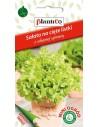 Sałata liściowa zielona fryzowana 0,5g