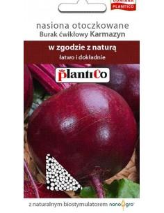 Burak ćwikłowy Karmazyn otoczka 100 nasion