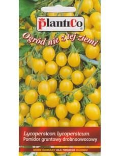 Pomidor gruntowy drobnoowocowy niski żółty Ola Polka 0,5g