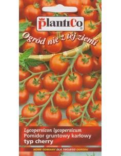 Pomidor gruntowy drobnoowocowy niski Maskotka 0,5g