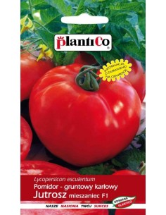 Pomidor gruntowy karłowy Jutrosz F1 0,5g