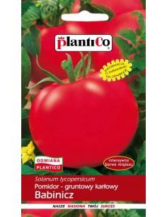 Pomidor gruntowy karłowy Babinicz 1g