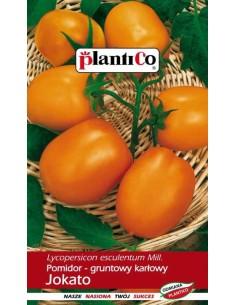 Pomidor gruntowy karłowy żółty Jokato 1g