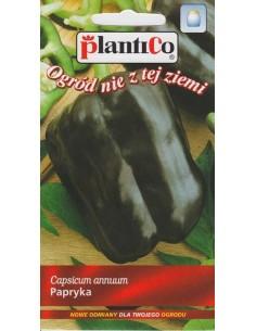 Papryka gruntowa fioletowa Oda 0,4g