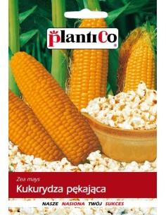 Kukurydza pękająca Jantar 10g