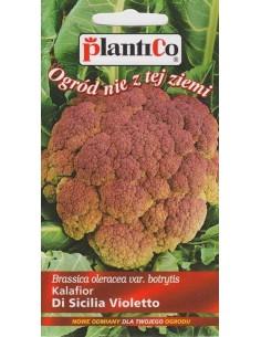 Kalafior Di Sicilia Violetto 0,2g