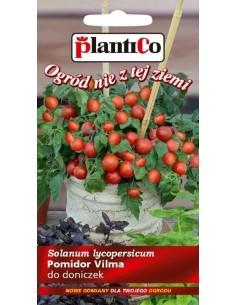 Pomidor gruntowy drobnoowocowy niski Vilma 0,2g