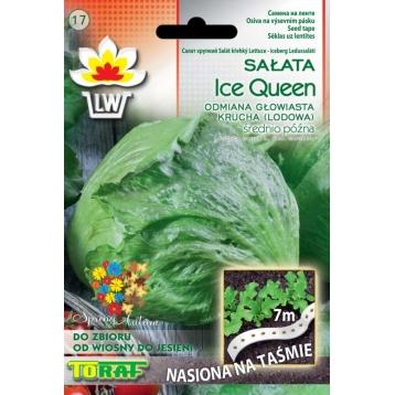 Sałata głowiasta krucha Ice Queen na taśmie 7m