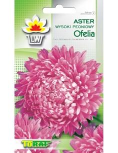 Aster ch. peon. Ofelia różowy 1g