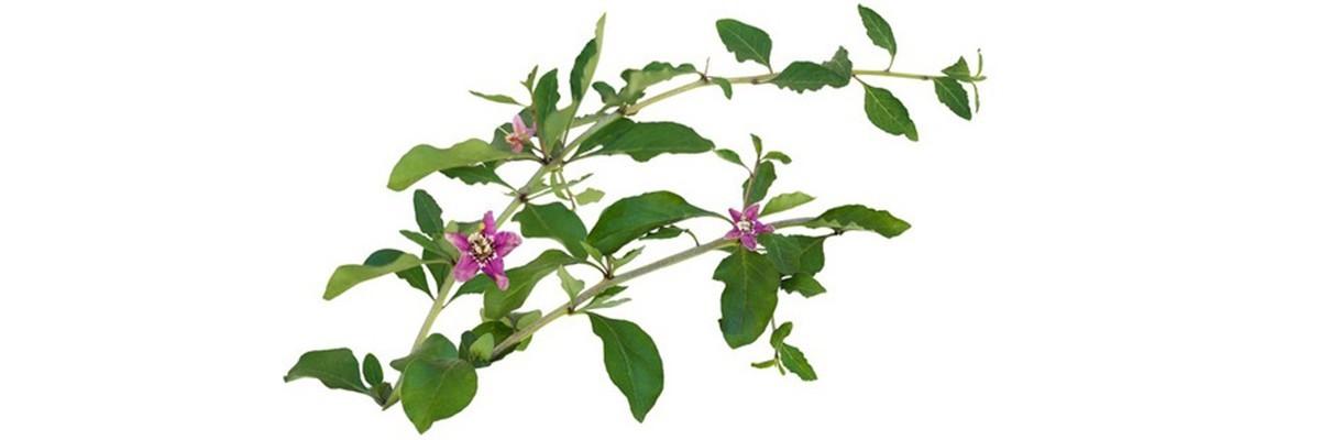 Mieszanki kwiatów wieloletnich