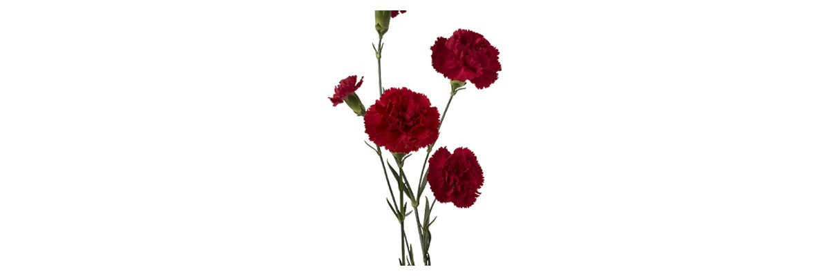 Pozostałe kwiaty wieloletnie
